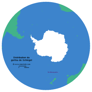 Carte de distribution du gorfou de Schlegel