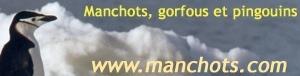 Manchots, gorfous et pingouins